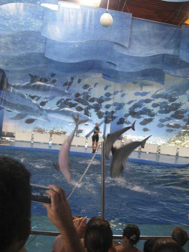 Barcelona-zoo-dauphins