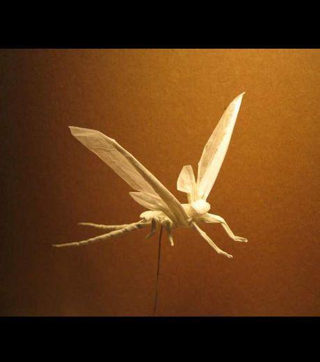 brian-chan-realise-de-fantastiques-origamis-en-forme-d-inse.jpg