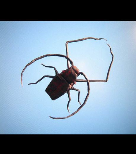 cet-insecte-effrayant-est-en-realite-un-pliage-en-papier_40.jpg