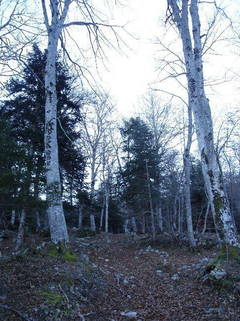 Vers le Pic du Gar : le col des Ares (797 m) 8