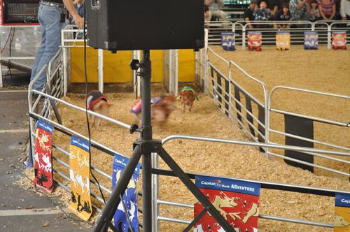 Rodeo 3931