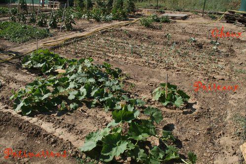 jardin_09.jpg