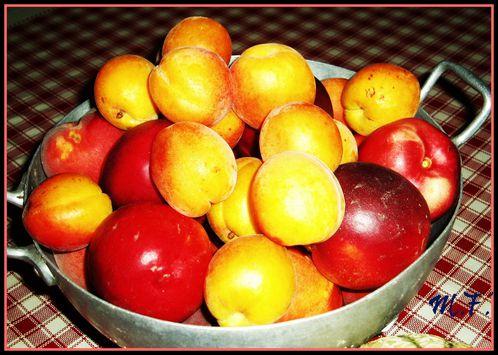 fruits-d-ete.jpg