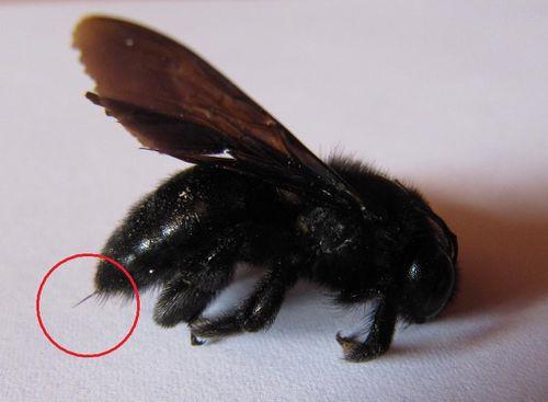 miel et abeilles en touraine overblog