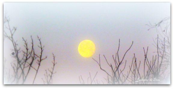lune signée
