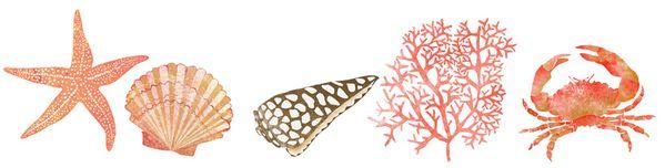 illustration coquillage étoile de mer corail