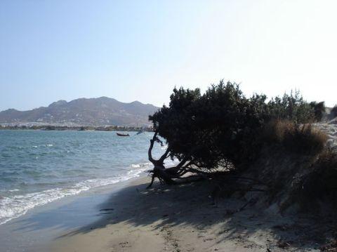 Naxos: Presqu'île de Prokopios et plage d'Agia Anna 4