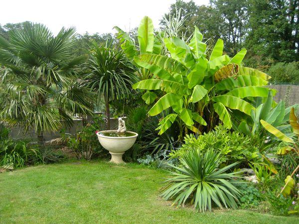 agavaceae les yuccas plantes voyageuses. Black Bedroom Furniture Sets. Home Design Ideas
