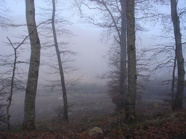 Vers le Pic du Gar : le col des Ares (797 m) 17
