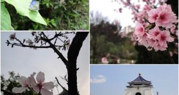 台北 國立中正紀念堂~市區賞櫻的好去處