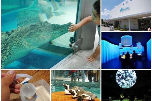 大阪景點 NIFREL海遊館 EXPOCITY萬博公園 來吃水吧~鵜鶘狐猴零距離互動,親子旅遊好去處