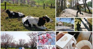 台東鹿野美食景點 初鹿牧場 賞櫻花喝初鹿鮮乳~櫻花季園內鮮奶買一送一喔