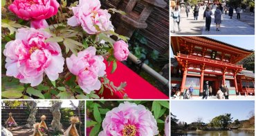 鎌倉景點 鶴岡八幡宮 神苑牡丹庭園~鎌倉代表地標,華麗牡丹展露嬌豔