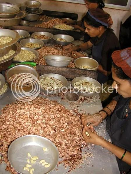 pics of women working in a cashew nut factory in Kumta Karnataka by Arun Shanbhag