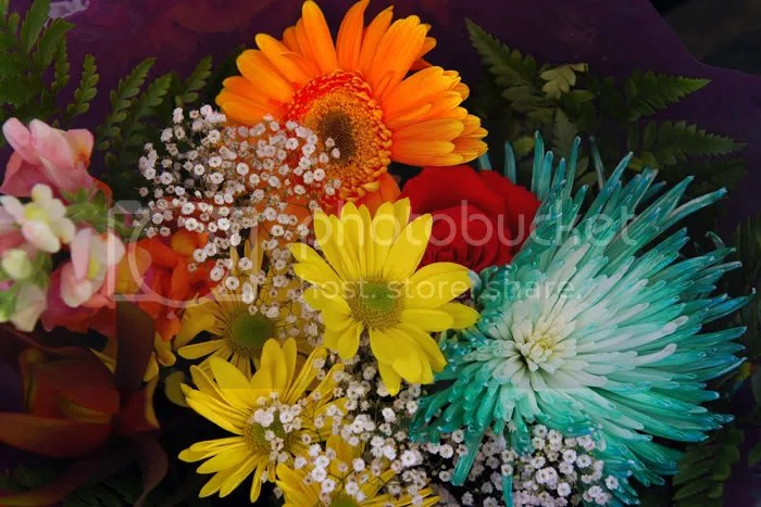 Pics of Daisies from a road side stall in Montreal Canada, pic by Arun Shanbhag