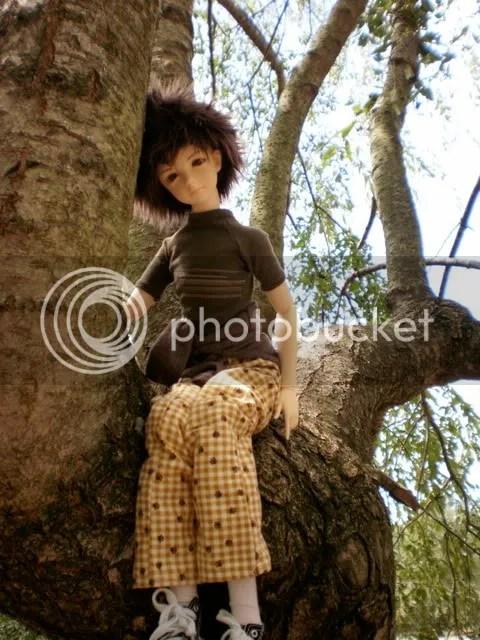 Lae Tree
