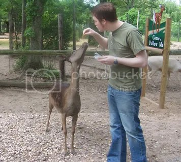 Feed and pet the deer!