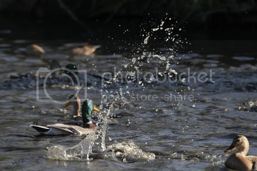 splashes reach high
