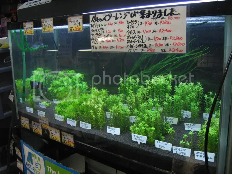 Syngo and Tonina Variety tank