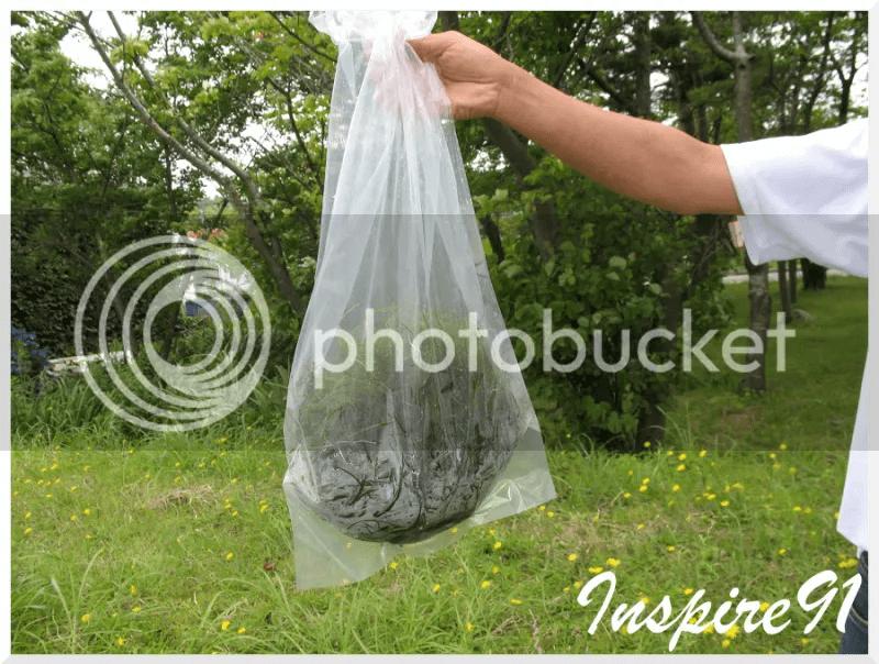 bagofplants