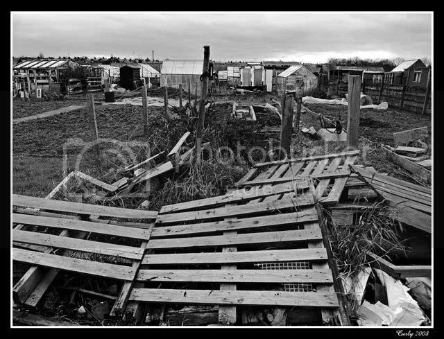 allotments, South Shields