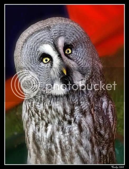 Owl, Jarrow near South Shields