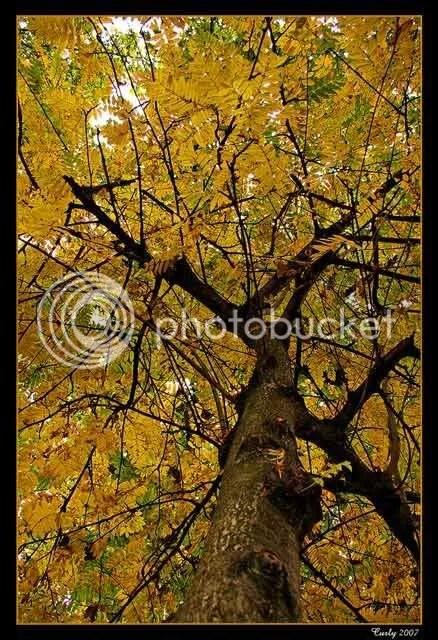 Tree in Westoe Village, South Shields