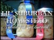 Lil' Suburban Homestead