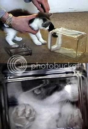 Bonsai Kitten 2011! (2/3)