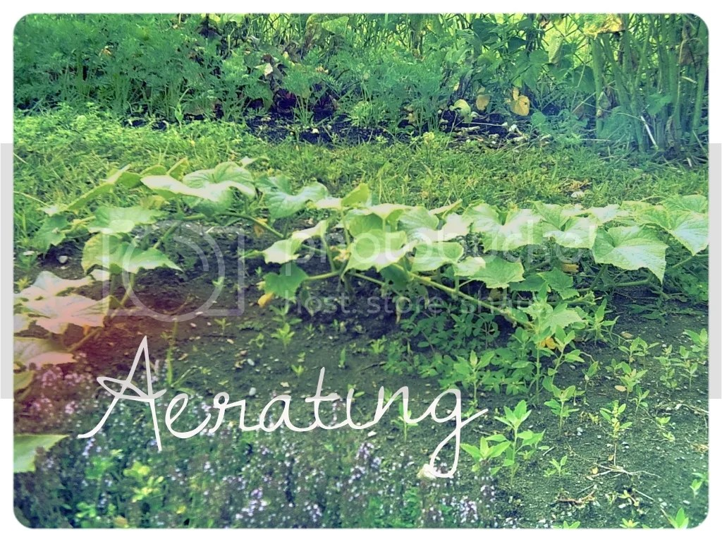 Aerating|Lessons From the Garden @godschicki