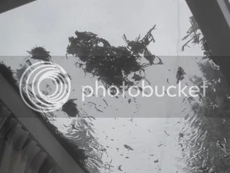 rommel op raam