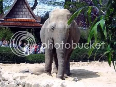 dierentuin