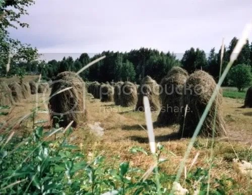 hooidrogen1999.jpg picture by corryjohan