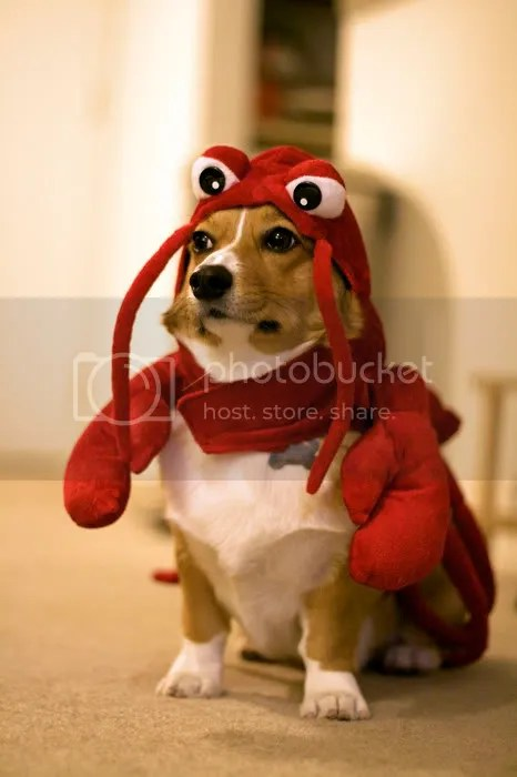 Lobsterdog.jpg