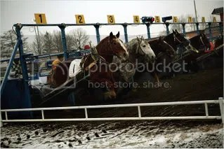 Horses head out of the starting gate at the Obihiro track. Bred for hard work, each weighs about a ton and is twice the size of a conventional racehorse.
