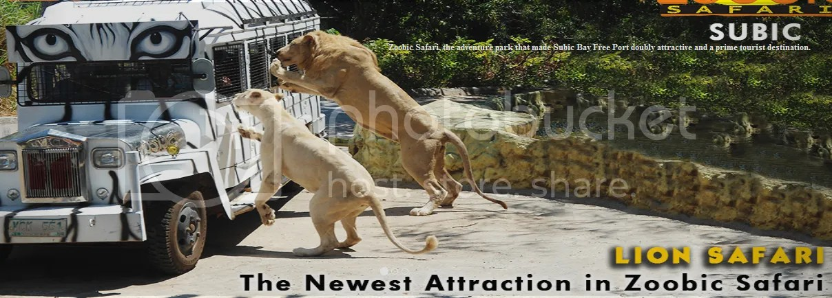 photo lionencounter.png