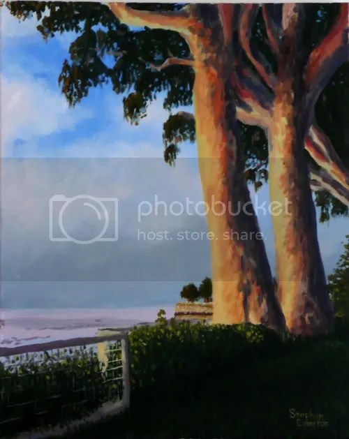 Santa Cruz Eucalyptus
