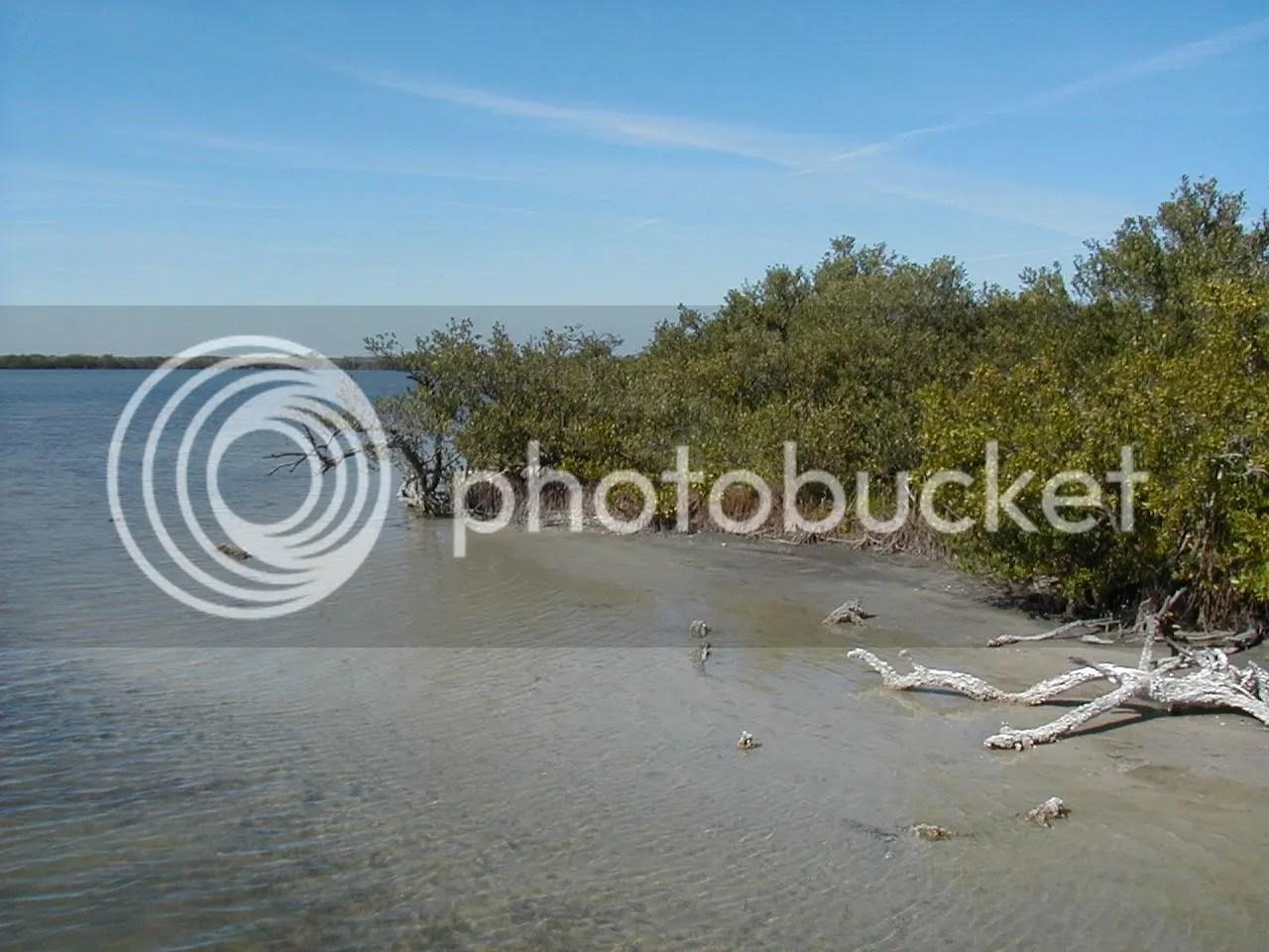 mangrove5.jpg