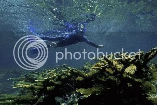Henry Wolcott 2005 / Marine Photobank