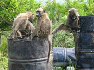 How much fun IS a barrel of monkeys, anyway?