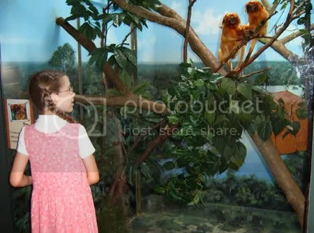 Kaira and the Monkeys