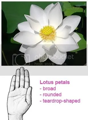 Rounded lotus petals
