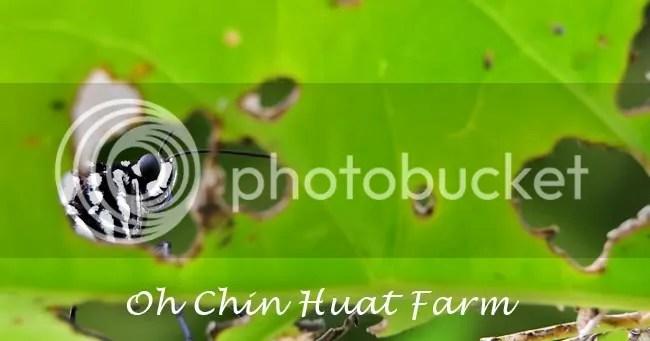 Oh Farm