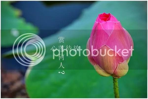 Awaiting Blossom