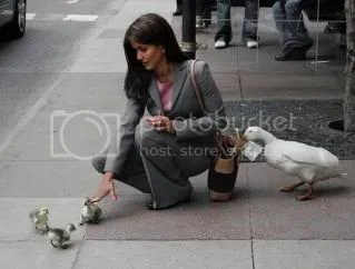 Stop! That duck isnt an approved Talk Talk agent!