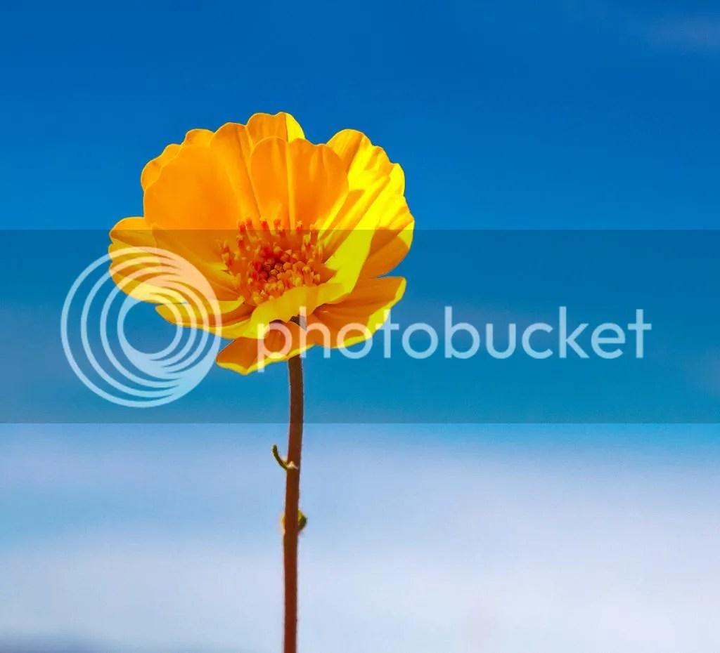 Flower photo Flower1_0865_zps5a28bd3f.jpg