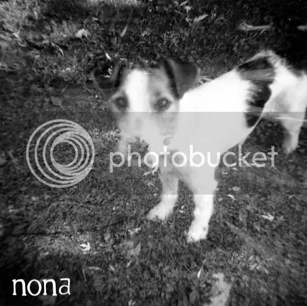NONA Crow Bait