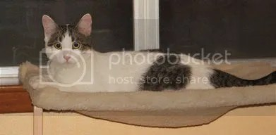Charlie, in his hammock