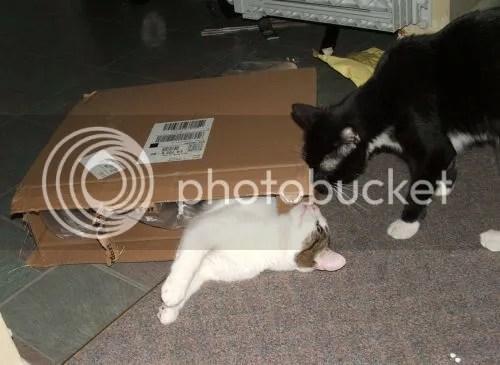 Hugo and Charlie and the box
