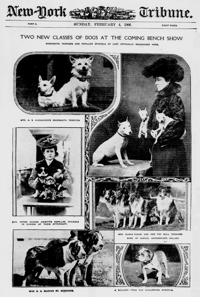 1906 Dog Show Headline photo 1906Various.jpg